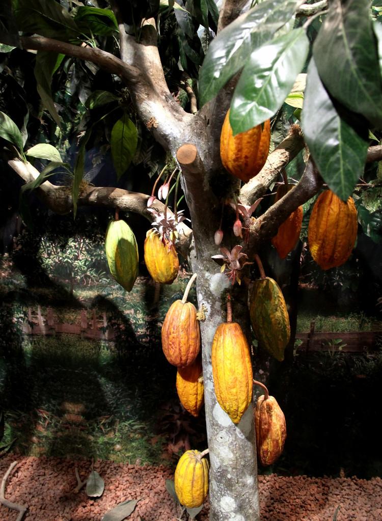 全球资讯_澳大利亚墨尔本巧克力工厂之旅_欣赏图库_糖果巧克力网